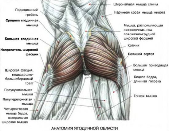Нарастить мышечную массу попа