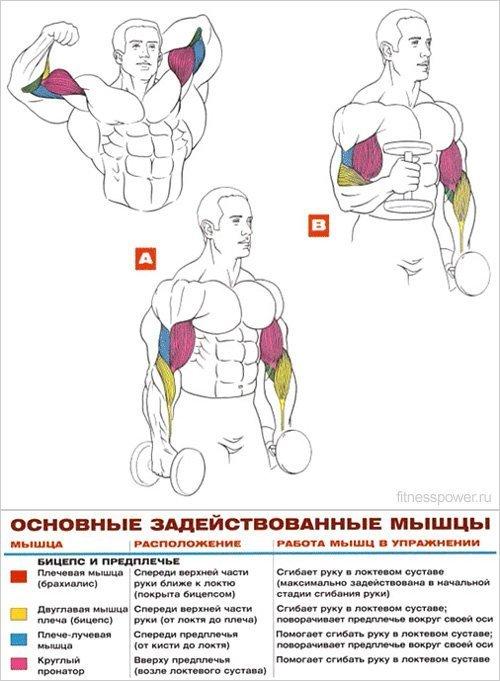 упражнение молоток