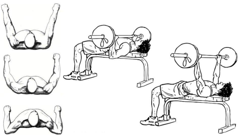 Что наращивает мышечную массу