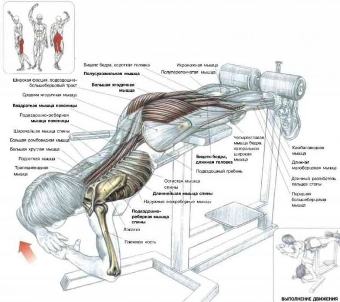 Мышцы, задействованные в гиперэкстензии