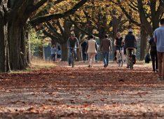 Люди гуляют в парке