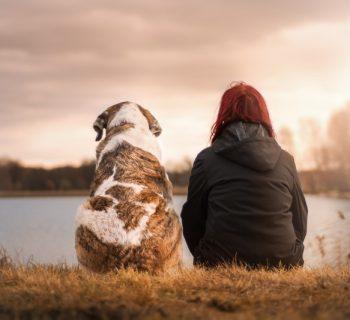 Собака и человек на берегу реки