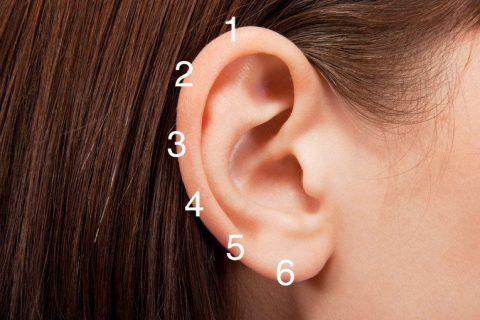 Точки на ухе для рефлексотерапии