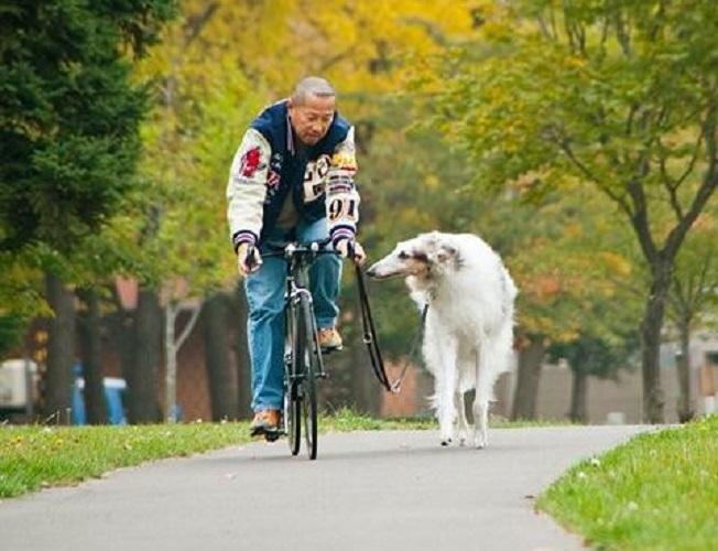 Прогулка на велосипеде с борзой