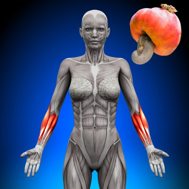 Кешью для мышц