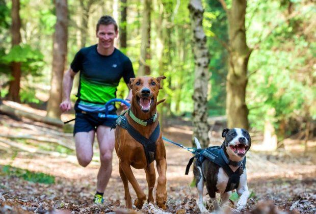 Бегать с собаками по лесу