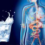 Вода для метаболизма