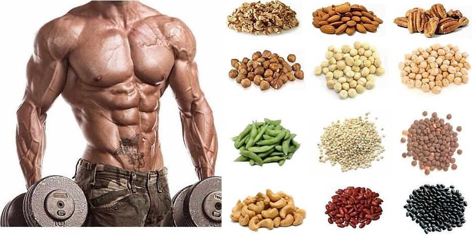 белок и мышцы